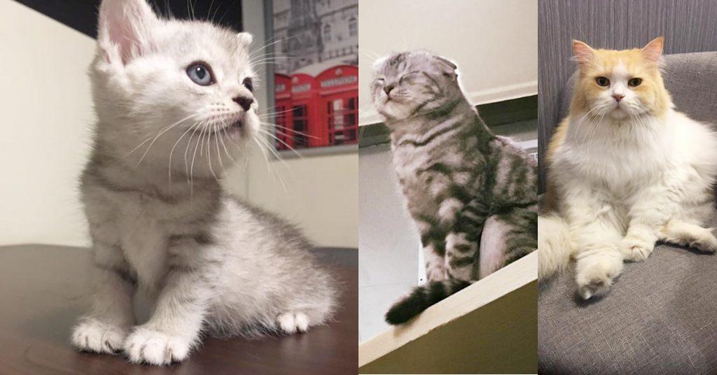 和貓咪有約
