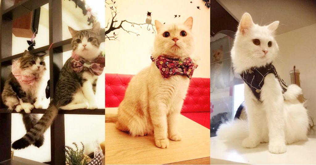 貓爸貓咪主題餐廳