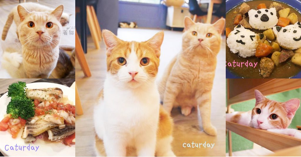 Caturday 養貓人家