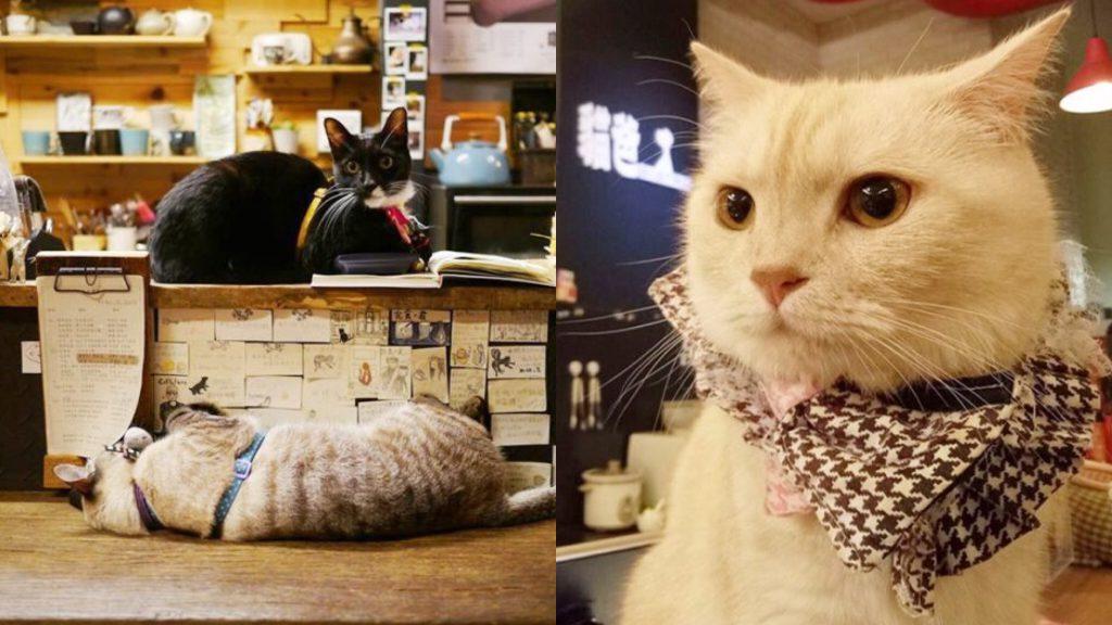 貓咪 咖啡廳