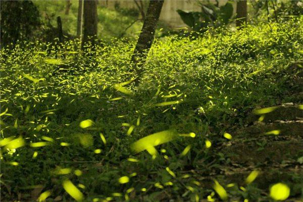 台中:東勢林場