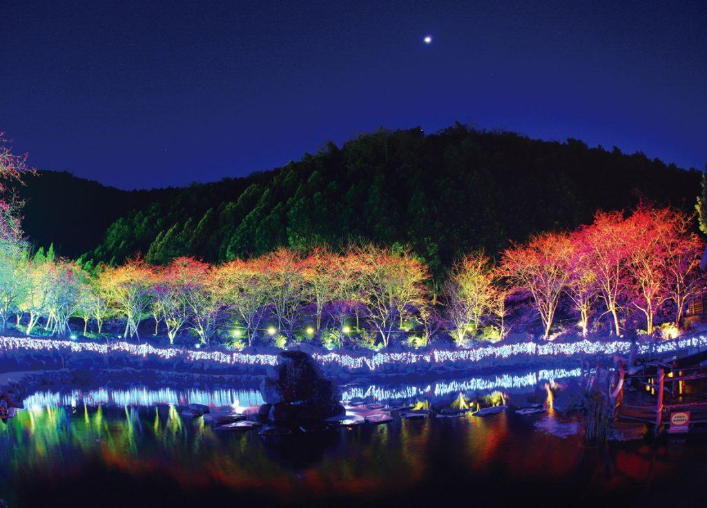 九族文化村櫻花季