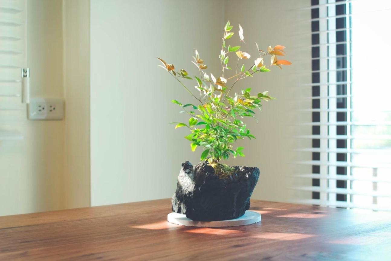 空間種植物也是修復地球的行動